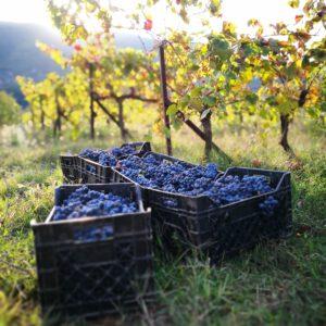 Weinseminar | Balkan-Weine