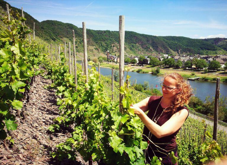 Wein-Marketing für Weingüter